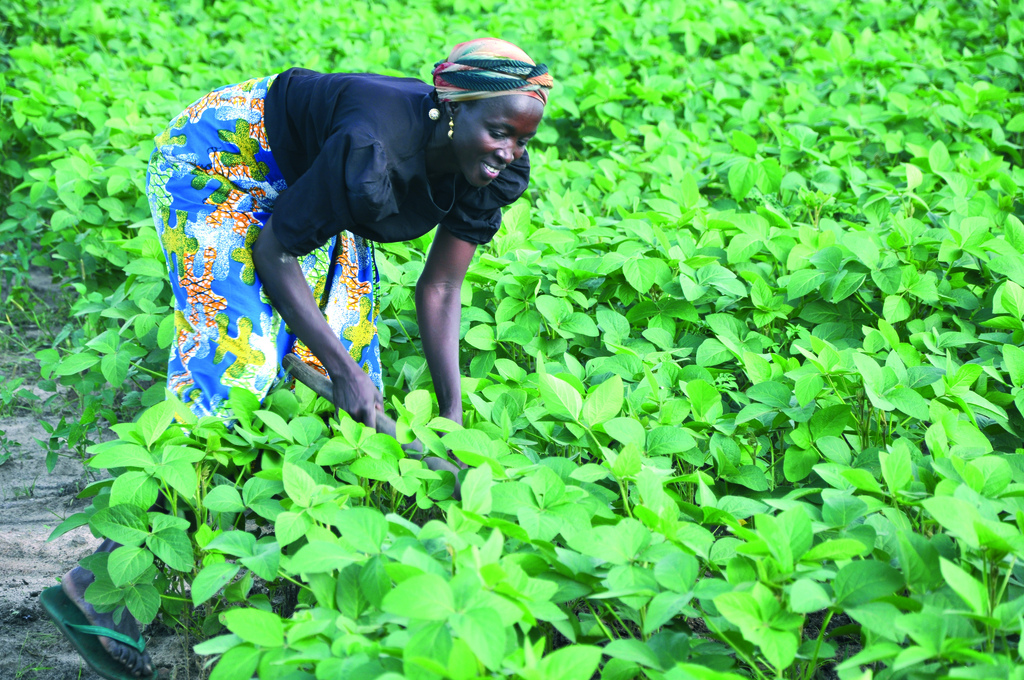 Woman farmer tending soybean field. Source: International Institute of Tropical Agriculture