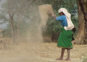 Women, on average, comprise 43% of the agricultural labour force in developing countries and account for an estimated two-thirds of the world's 600 million poor livestock keepers. Photo: BBC World Service