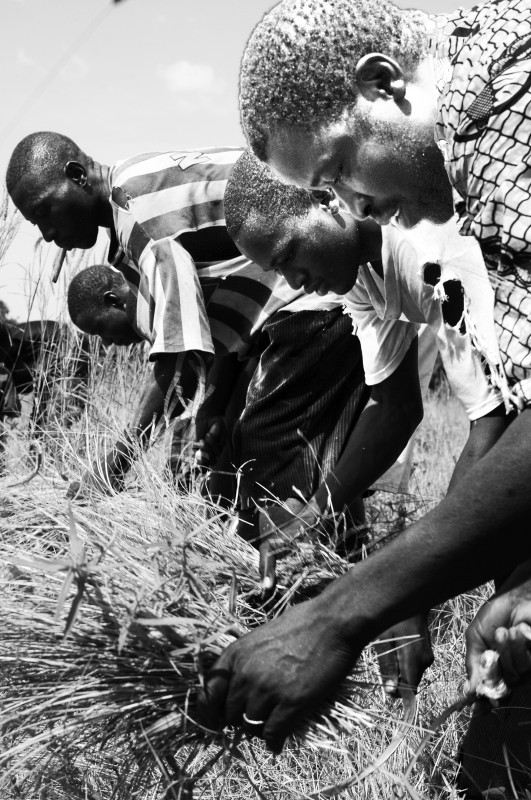 Farmers in Segou